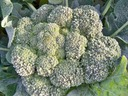 Frosty Broccoli