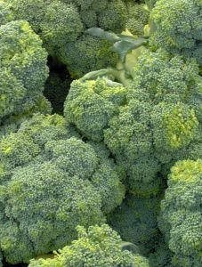 580707_broccoli_for_sale_textmedium